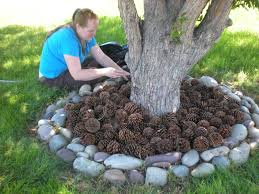 Backyard Business Ideas by What A Great Idea Use Pine Cones Instead Of Mulch So I U0027ll Be