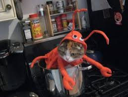 Funny Halloween Costumes Cats 10 Halloween Costumes Cats Images Animals