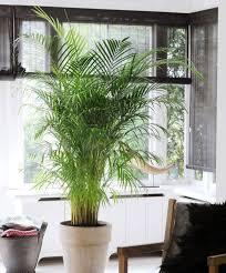 Low Light Indoor Trees The Best Low Maintenance Indoor Plants Huffpost
