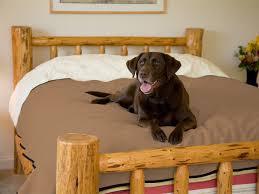 Dog Blankets For Sofa by Pet Blanket U2013 Mambe Blanket Co