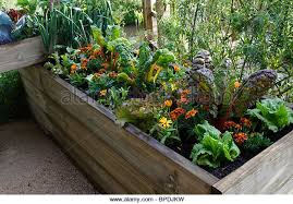 small vegetable gardens stock photos u0026 small vegetable gardens