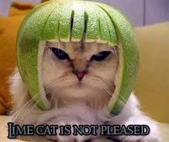 Unamused Cat Meme - trashcat is not amused know your meme