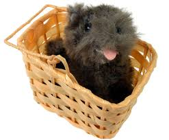 dorothy wizard of oz costume adults wizard of oz dorothy u0027s toto dog in basket costume prop