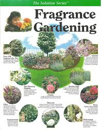 Fragrant Shade Plants - image result for can lilacs grow in shade scented garden