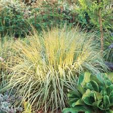 17 top ornamental grasses grasses autumn and gardens