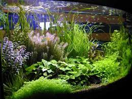 Plants For Aquascaping Best 25 Freshwater Aquarium Plants Ideas On Pinterest