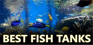 best fish tanks 2017 top rated home aquarium reviews