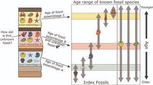 The principle of faunal succession allows scientists to use the fossils to understand the relative age Nature