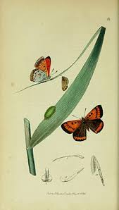 list of butterflies of papua new guinea revolvy