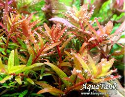 the aquarium plant handbook takashi amano pdf to jpg