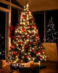 best decorated trees trees uk grown cut