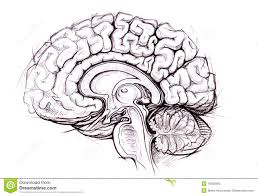 best 25 human brain diagram ideas on pinterest brain diagram