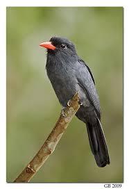 Ontario Backyard Birds 1608 Best Beautiful Birds Images On Pinterest Beautiful Birds