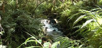 World Botanical Gardens World Botanical Gardens Big Island Of Hawaii