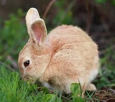 rabbit bunny rabbits ages 8