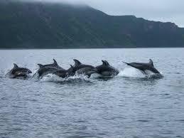 Alaska wildlife images Wildlife viewing jpg