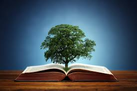 tree of knowledge stock image image of green beginnings 48555317