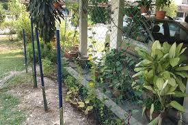 bleeding gums blog new trellis a month later