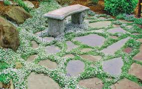 outdoor u0026 garden design have a cute landscaping with green dwarf