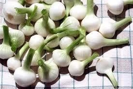 oignon blanc cuisine oignons blancs au xérès fino la cuisine du jardin