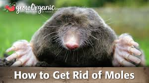 how to get rid of gophers organic gardening blog