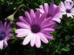 Birth Flowers By Month - top 25 best september birth flower ideas on pinterest birth