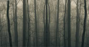 spooky texture creepy forest wallpaper wallpapersafari
