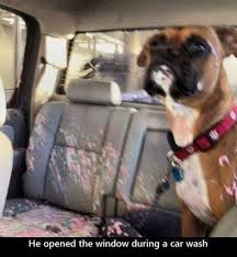 boxer dog youtube boxer dog derp dump here are some of the many reasons boxer dogs