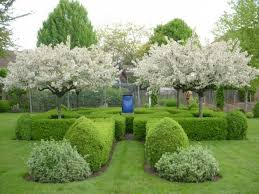 outside ornamental trees landscaping with ornamental trees