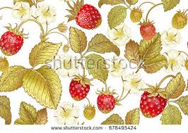 Template For Kitchen Design Vector Seamless Background Bush Blossoming Strawberry Stock Vector