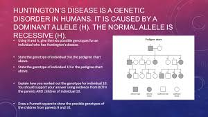 genetic variation revision ppt download