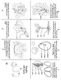 pumpkin life cycle mini book advanced by create2learn tpt