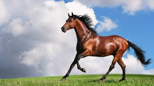 mustang horse running horse running on a green valley 4249175 1920x1080 all for desktop