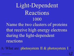 What Happens During The Light Reactions Of Photosynthesis Photosynthesis Double Jeopardy Molecules Miscellaneous True Or