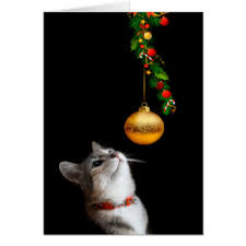 cat christmas cards invitations greeting u0026 photo cards zazzle