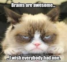 Hipster Cat Meme - a mind is a terrible thing to waste pinteres