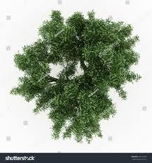 White Oak Leaf 3d Sessile Oak Tree Isolated Over Stock Illustration 102172369