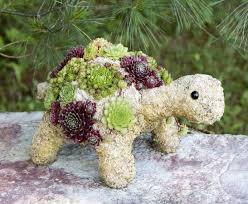 Succulent Kits by Succulent Topiaries Shop For Living Wreaths U0026 Diy Topiary Kits