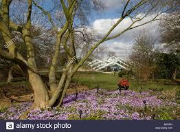 Royal Botanic Gardens Kew Richmond Surrey Tw9 3ab Crocus Field At Royal Botanic Gardens Kew Richmond Surrey