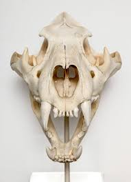 How Many Bones Form The Cranium Best 25 Skull Anatomy Ideas On Pinterest Mouth Drawing Human