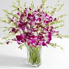 purple orchids deluxe purple dendrobium orchids