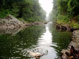 Vermont National Parks images Vermont hike with your dog jpg