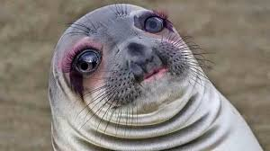Seal Meme - put this awkward seal through perfect365 app i am dying funny