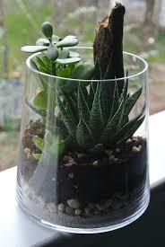 jaded greenes terrarium succulent terrarium home and living