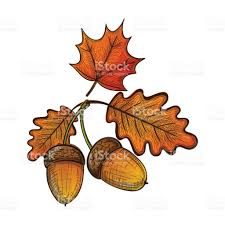 colorful sketch of an oak leaf and acorn stock vector art