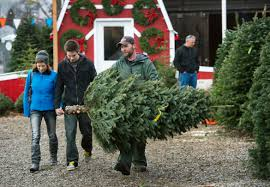 Pacific Northwest Christmas Tree Association - researcher aims to prolong christmas trees u0027 lives the spokesman