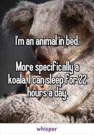 Animal In Bed Meme - animal in bed meme 28 images 25 best memes about im an animal in
