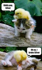 Funny Cat And Dog Memes - fun claw funny cats funny dogs pics of cats dogs and other