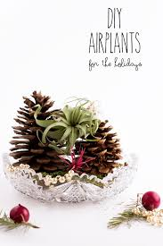 Air Plants Holiday Diy Air Plant Gifts Flax U0026 Twine