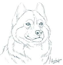 14 realistic husky coloring pages animals printable coloring pages